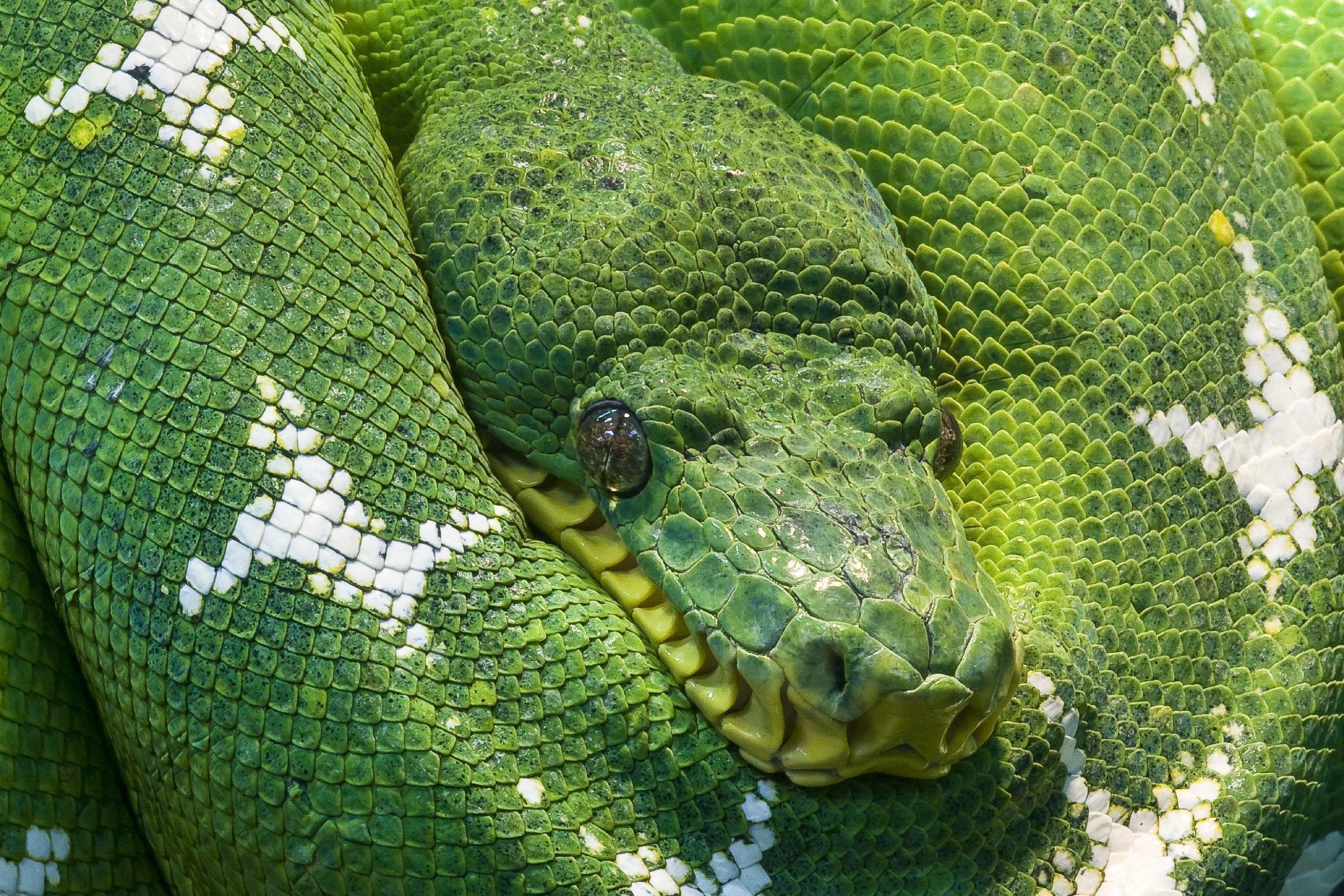 105 Wandtattoo Schlange Ast grün blau Loch in der Wand nikima